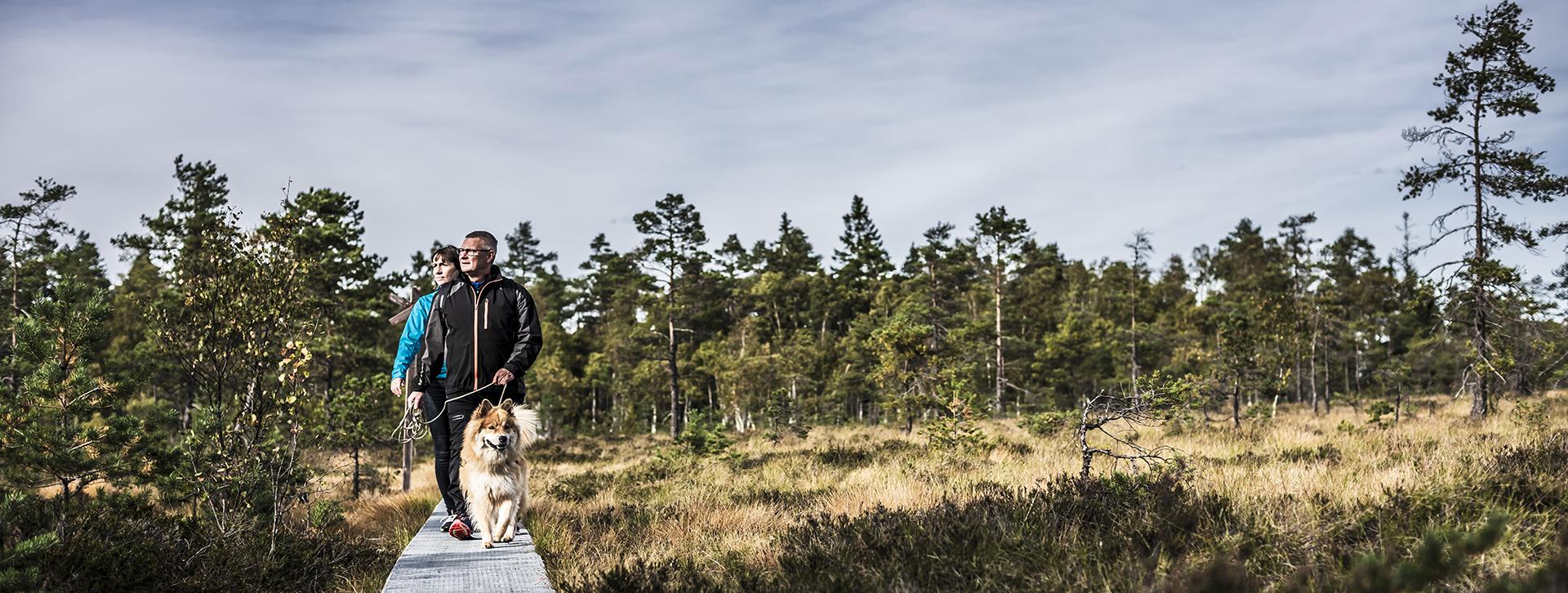 Bo i Ulricehamn - Par med hund vandrar på Komosse